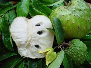 The Soursop Fruit As A Cure For Cancer Healthy Cancer Chick