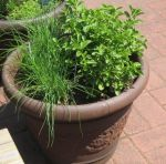 potted_herbs